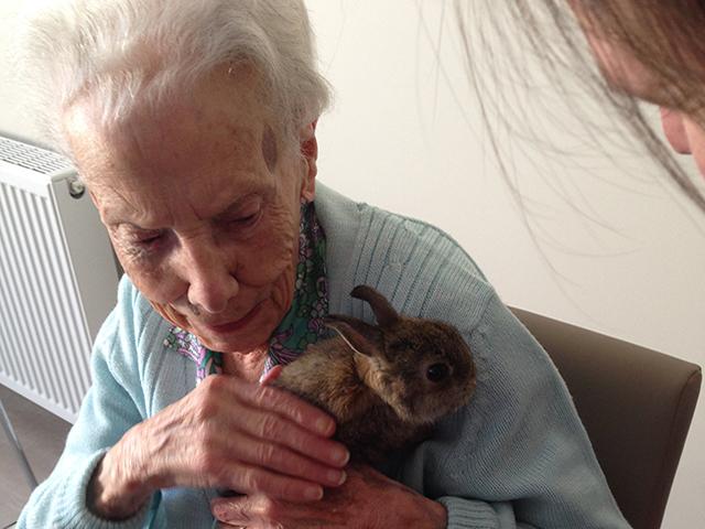 Arcare Aged Care Craigieburn Rabbit 2