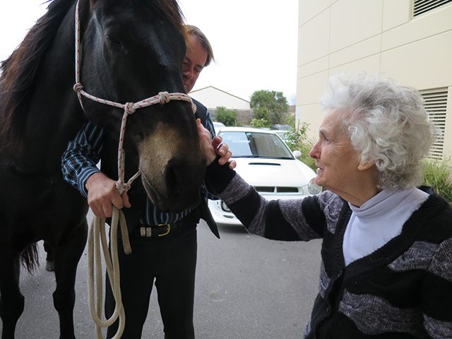 Arcare Aged Care Knox Wantirna South Horses