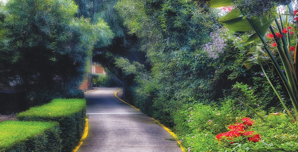 Arcare_Aged_Care_Cheltenham_Sandfield_Courtyard