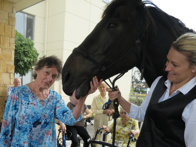 Arcare Aged Care Knox Burnside Horses
