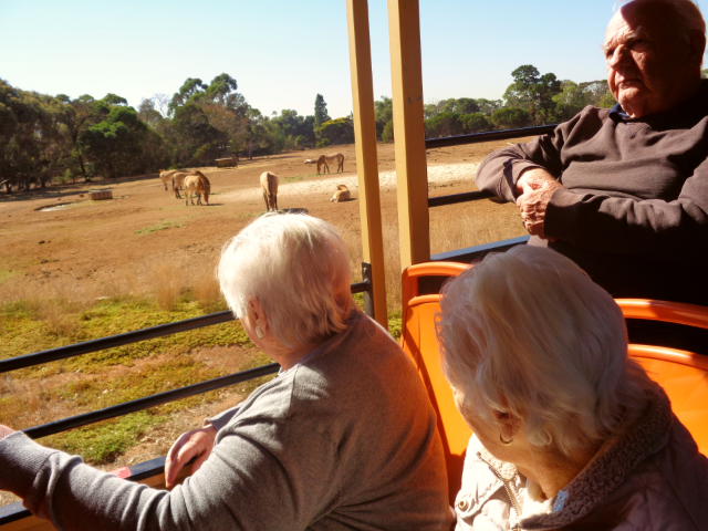 Arcare Aged Care Burnside Safari 1