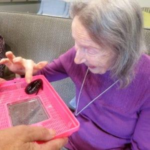 Arcare Aged Care Caulfield Backyard Bugs