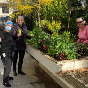 Arcare Aged Care Malvern East Out In The Garden