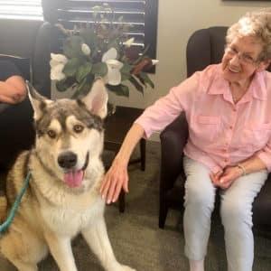 Arcare Aged Care Surrey Hills Shadow Dog