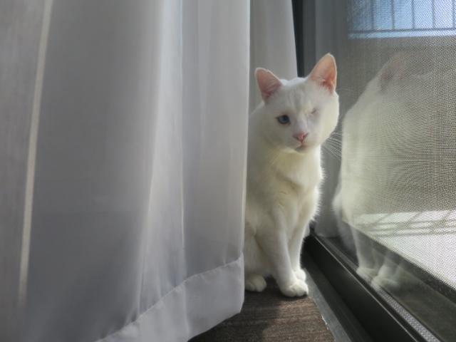 Arcare_Aged_Care_Caulfield_Cat
